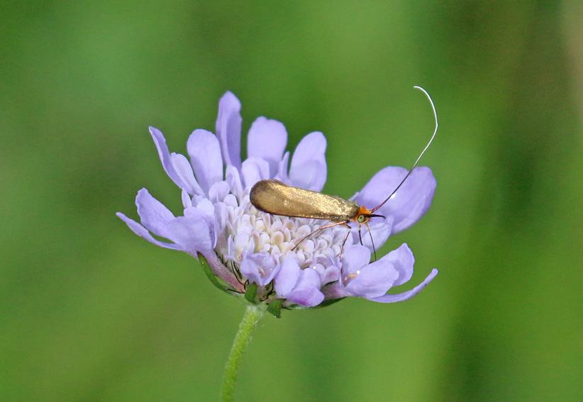 Mothx2