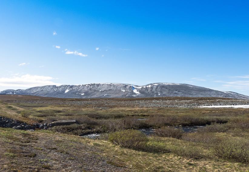 NorwegianFellsx6
